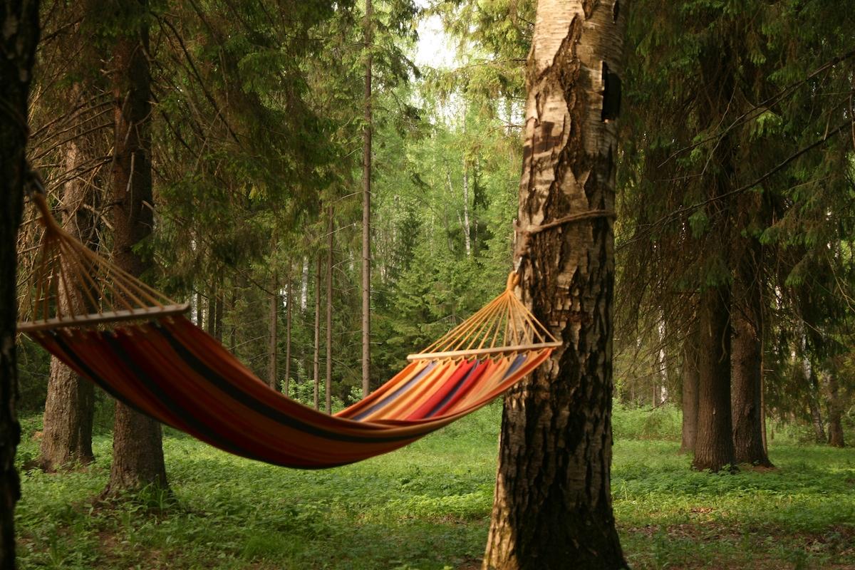 Картинки в лесу на отдыхе